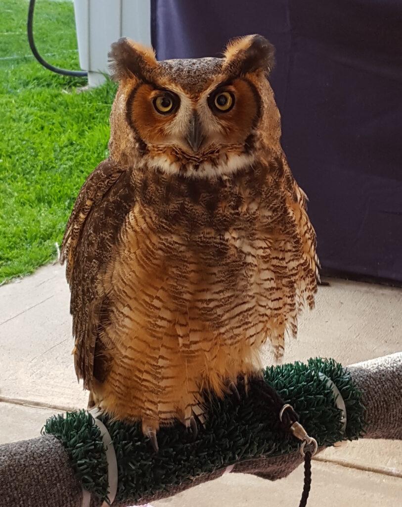 owl rescue NJ