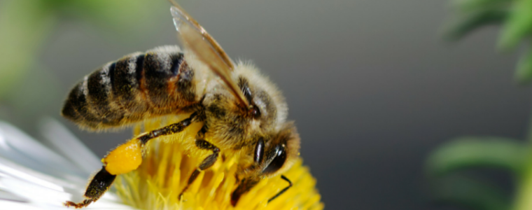 About Our Honeybees