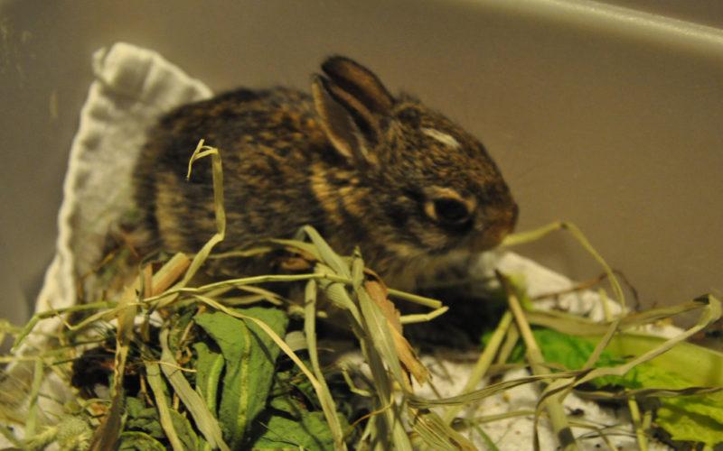 bunny rescue NJ