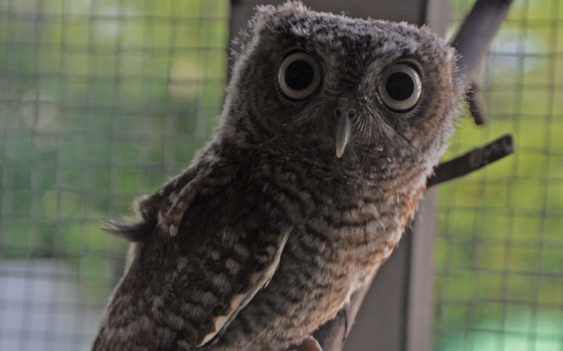NJ owl rescue