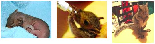 NJ squirrel rescue