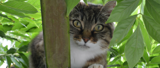 Domestic Cats Causing Danger to Themselves and Environment