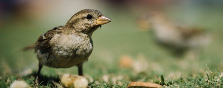 Can you Prevent Bird Deaths from Window Strikes?