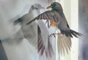 stop birds from hitting window
